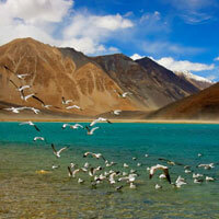 Flights to Leh