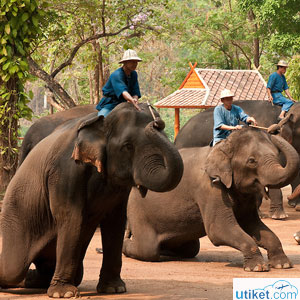 Thai Elephant Conservation Cen